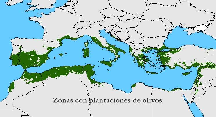 Cultivo de olivos en europa