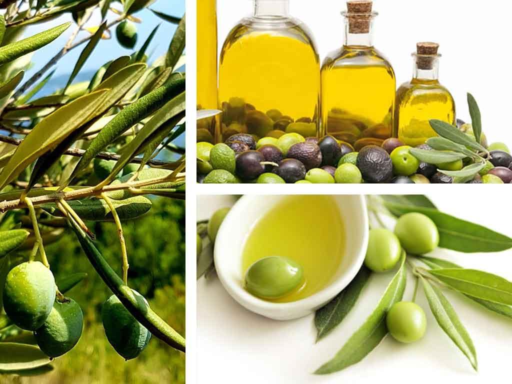 olivos-y-aceite-oliva