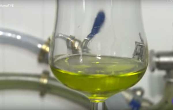 control aceite de oliva