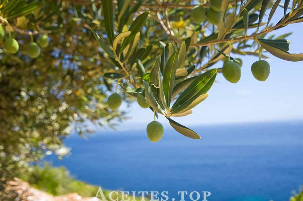 aceite de oliva y mar
